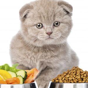 Τροφή για Γάτες