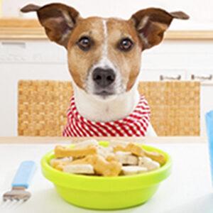 Τροφή Σκύλου